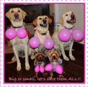 dogs pink