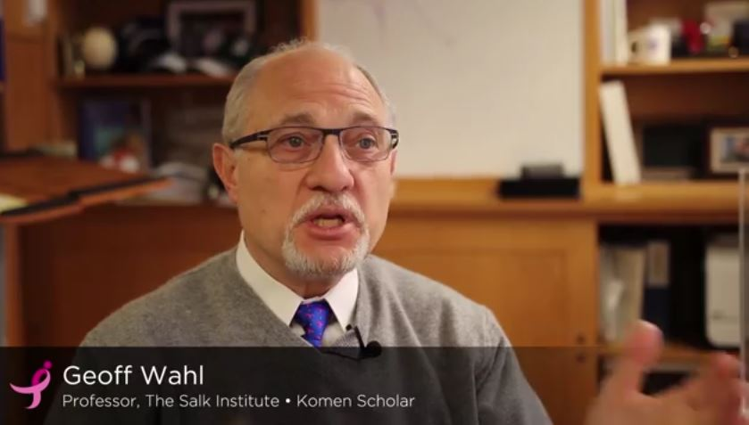 Geoffrey Wahl, recipient of the National Cancer Research Outstanding Investigator Award. Watch him speak about where breast cancer research is going today.